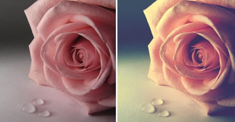 photoshopactionflower 70 Of The Best Photoshop Actions For Enhancing Photos