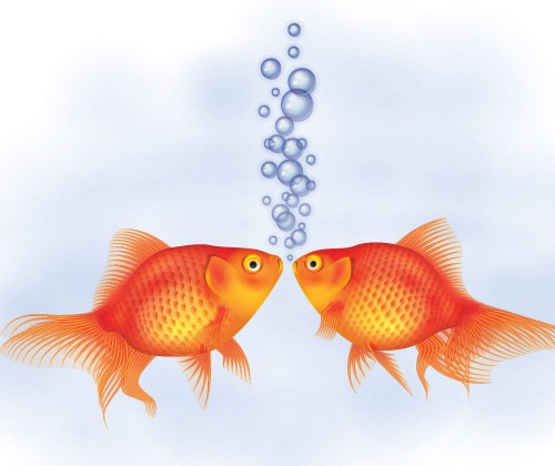 goldfish 40 Fresh Best Illustrator Tutorials From 2013