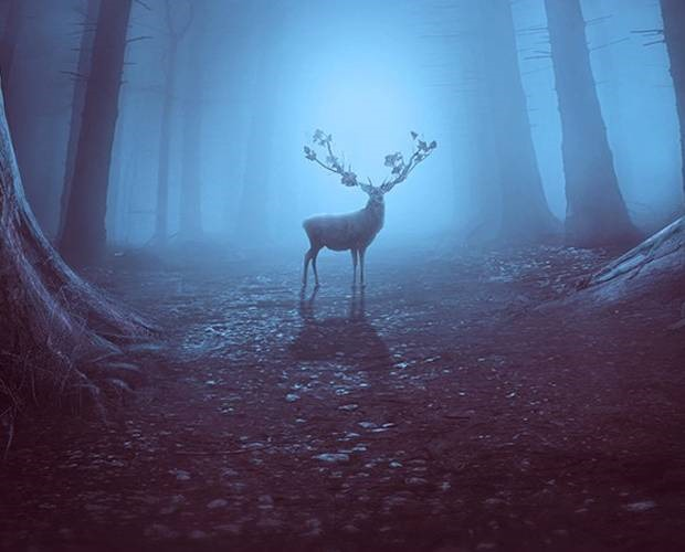 forest2 40 Fresh new Photoshop tutorials from 2017