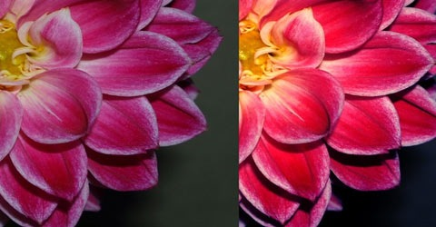 flower 70 Of The Best Photoshop Actions For Enhancing Photos