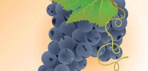 realistic-grapes