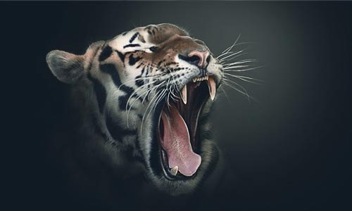 liontabletshadow 100 Photoshop Tutorials For Learning Photo Manipulation