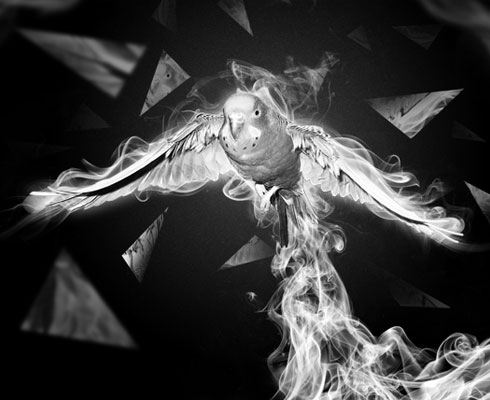 smokebird 40 Best Photoshop Tutorials From 2011