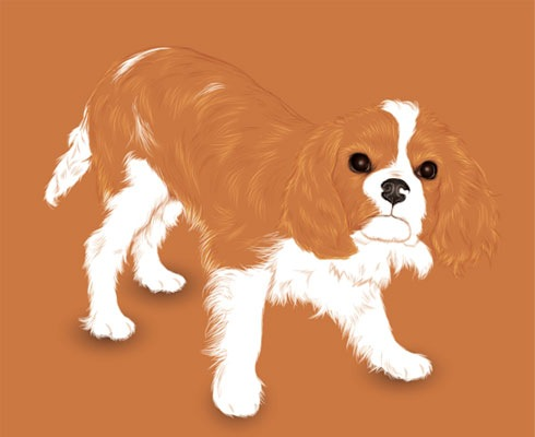 dog 40 Fresh Illustrator Tutorials From 2011