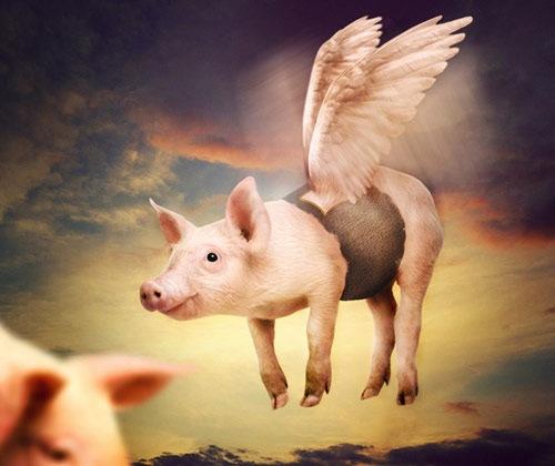 flying-pig-tutorial