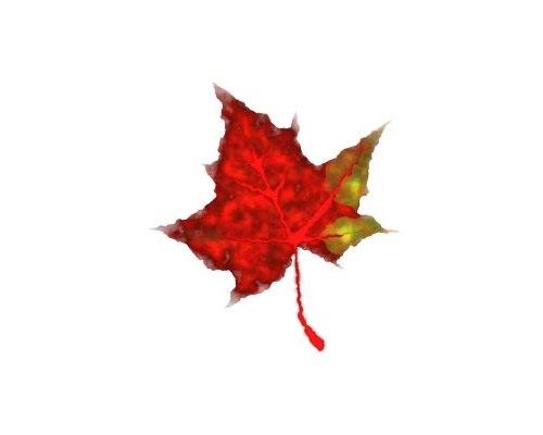 leaf-illustration