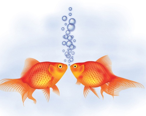 goldfish Best Of Web And Design In February 2013