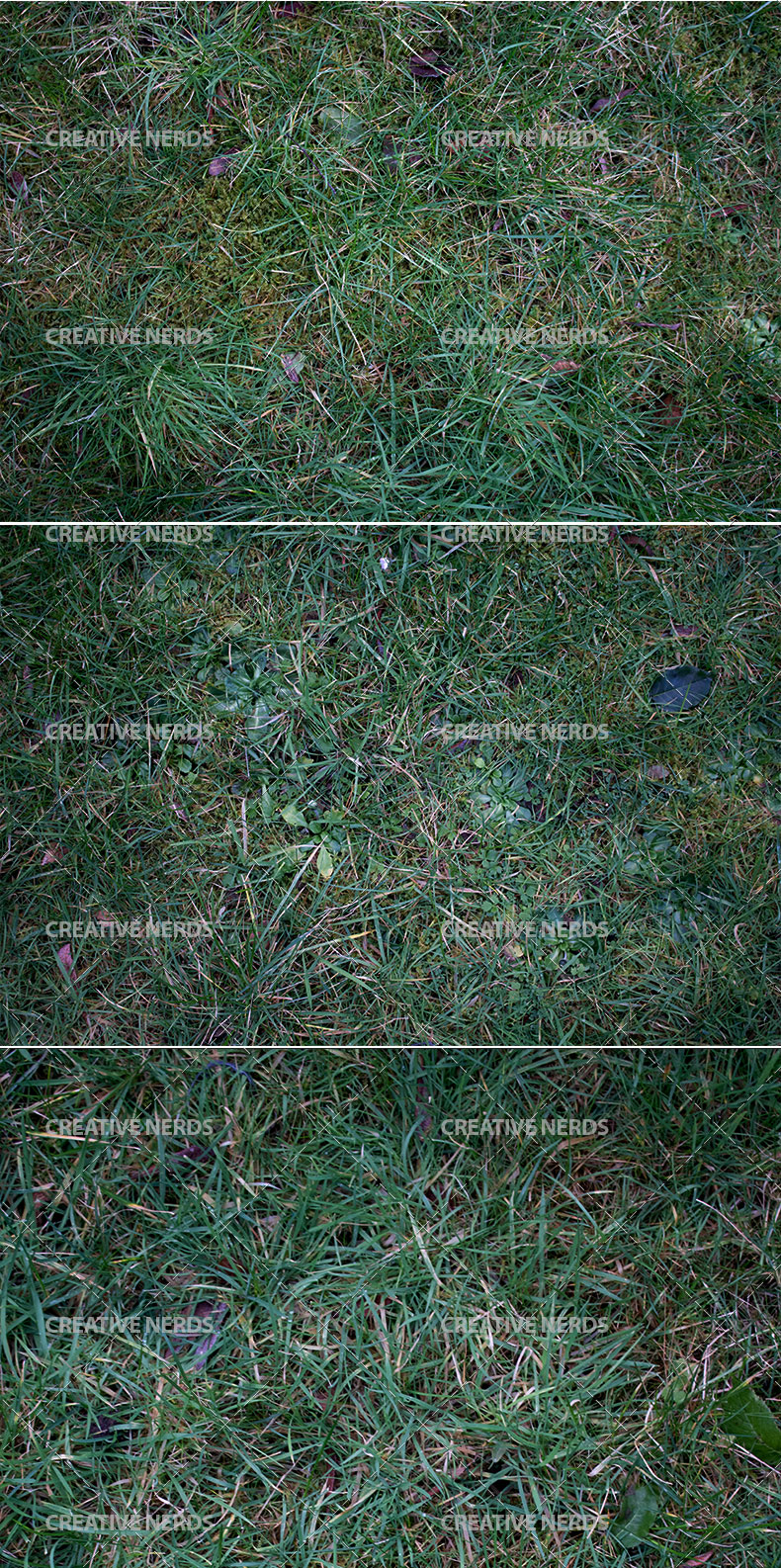 long grass texture preview Premium members: 5 New awseome premium design resources