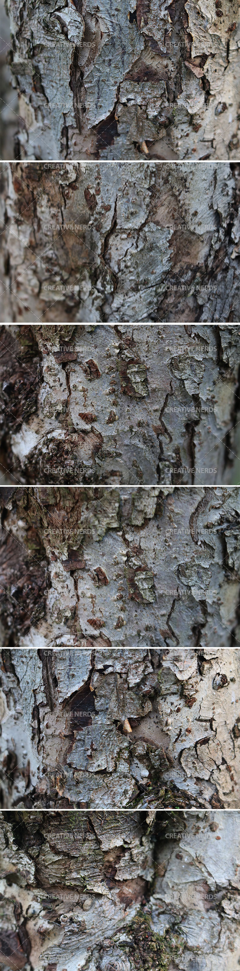 tree barked texture big preview Premium members: Tree bark hi res texture set